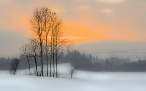 Picture winter, sunset, fog