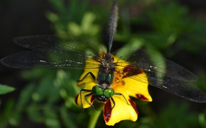 Picture summer, grass, eyes, flowers, insects, nature, green, dragonflies