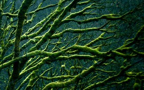 Picture trees, branches, moss