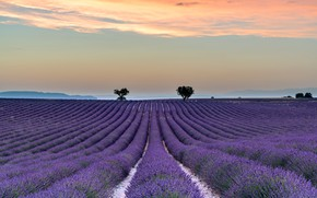 Picture field, summer, the sky, clouds, trees, flowers, mountains, nature, fog, hills, France, track, dal, horizon, …