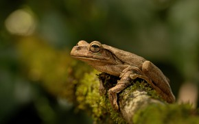 Picture look, background, frog, amphibian