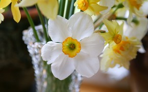 Picture macro, bouquet, petals, daffodils