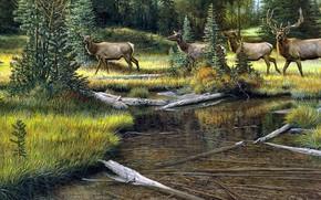 Picture forest, shore, figure, picture, art, painting, deer, pond, the herd, Ron Van Gilder