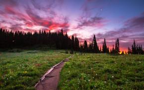 Picture trees, landscape, sunset, nature, meadow, track, USA, grass, national Park, National Park, Mount Rainier, Mount …