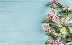 Picture flowers, background, blue, Pink, wood, flowers