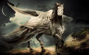 Picture horse, horse, wings, Pegasus