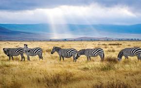 Picture field, the sky, grass, clouds, rays, light, mountains, nature, hills, pasture, Zebra, Savannah, haze, a …