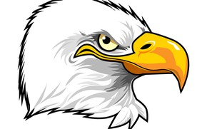 Picture feathers, eagle, beak, penetrating gaze