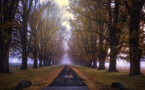 Picture road, autumn, fog