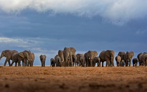 Picture Africa, elephants, the herd, Kenya, Amboseli national Park