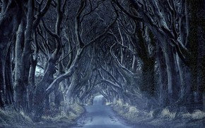 Picture road, trees, the tunnel, Northern Ireland, Antrim