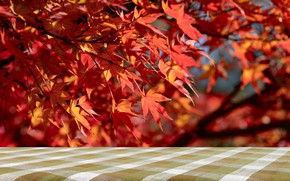 Picture autumn, leaves, tree, colorful, red, maple, autumn, leaves, autumn, maple