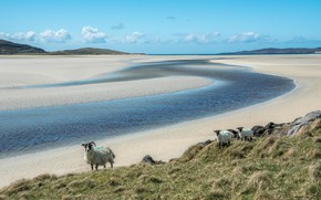 Picture sand, grass, clouds, landscape, mountains, nature, river, hills, shore, paint, sheep, slope, pasture, three, sheep, …
