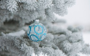 Picture frost, holiday, toy, tree, ball