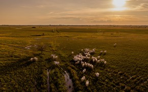 Picture the sky, the sun, morning, cows, horizon, pasture, meadow, puddles, the view from the top, …