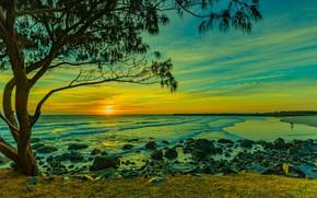 Picture sea, the sun, sunset, stones, tree, shore