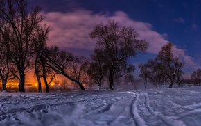 Picture winter, snow, trees, landscape, sunset, nature, lights, the evening