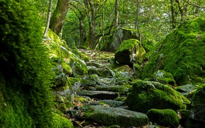 Picture forest, stones, moss