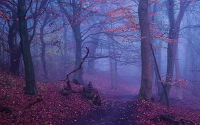 Picture autumn, forest, trees, nature, fog, stump, path