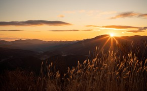 Picture the sun, rays, dawn, morning