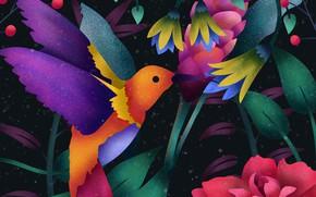 Picture Art, Wallpaper, Digital, Hummingbird
