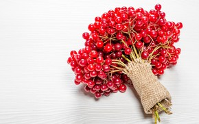 Picture berries, light background, Kalina