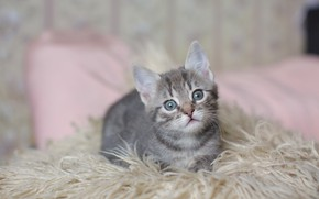 Picture cat, look, kitty, grey, pile, muzzle, bed, cute, plaid, kitty, striped