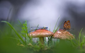 Picture butterfly, mushrooms, dragonfly, bokeh