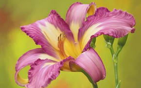 Picture flower, pink, daylilies