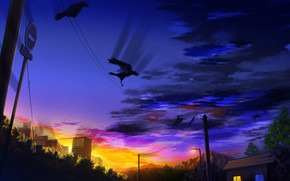 Picture sunset, the city, crows, power lines