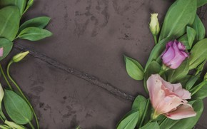 Picture flowers, background, pink, buds, pink, flowers, eustoma, eustoma