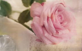 Picture rose, blur, lies