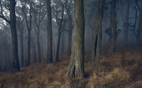 Picture forest, grass, trees, branches, fog, trunks, slope, twilight