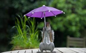 Picture grass, nature, pose, umbrella, table, background, rain, lilac, Board, legs, umbrella, protein, stand, keeps, bokeh