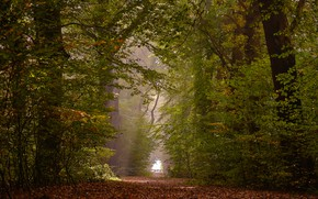 Picture autumn, forest, trees, Netherlands, fallen leaves