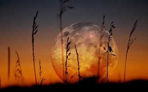 Picture The SKY, The MOON, MACRO, GRASS, A MONTH