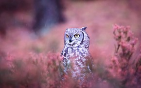 Picture the rain, look, flowers, background, rain, pink, owl, bird, glade, portrait, grey, bokeh, owl, motley