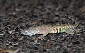Picture night, lizard, sleeping