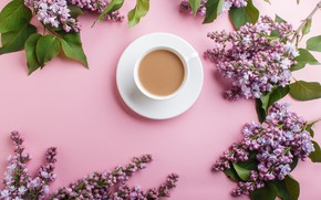 Picture flowers, pink, flowers, lilac, coffee cup, lilac, a Cup of coffee