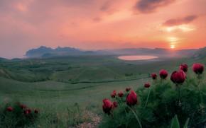 Picture landscape, flowers, mountains, nature, dawn, field, spring, morning, Crimea, meadows, peonies, Игорь Прошаков