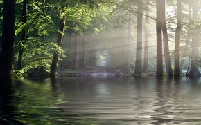 Picture forest, the sun, rays, river
