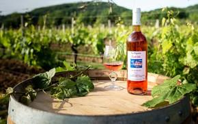 Picture wine, France, glass, vineyard, rose, barrel, vine, Puy-l'Évêque, Domaine de la Paganie, bouteilles, Vins