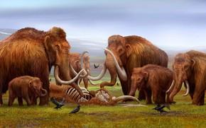 Picture Bones, Art, Elephants, Skeleton, The corpse, Goodbye, Crows, Mammoth, Mammoths, Tusks, Mammoths, Cubs, Древние животные