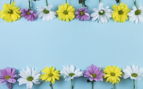 Picture flowers, yellow, white, White, lilac, Yellow, composition
