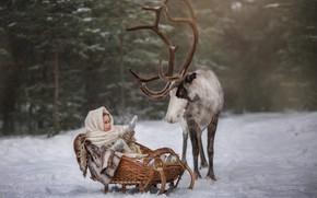 Picture winter, forest, snow, animal, deer, girl, sleigh, child, Юлия Бусыгина