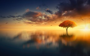 Picture Sunset, The sun, The sky, Water, Clouds, The ocean, Reflection, Sea, Tree, Sunrise, Horizon, Birds, …