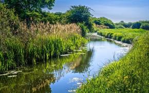 Picture grass, landscape, nature, beauty, channel, Sunny