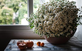 Picture on the table, window, pumpkins, a bouquet of daisies