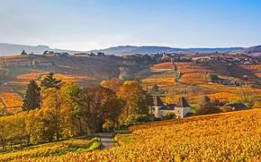 Picture autumn, France, Lantinga, the Beaujolais region