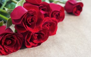 Picture flowers, red, roses, buds